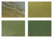 对虾养殖常见优良水色